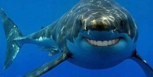 Sharks-human-teeth-6-990x500